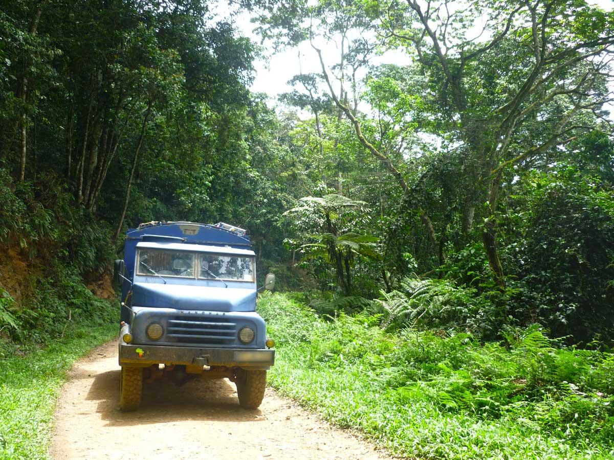 Durch den Biwindi Regenwald in Uganda