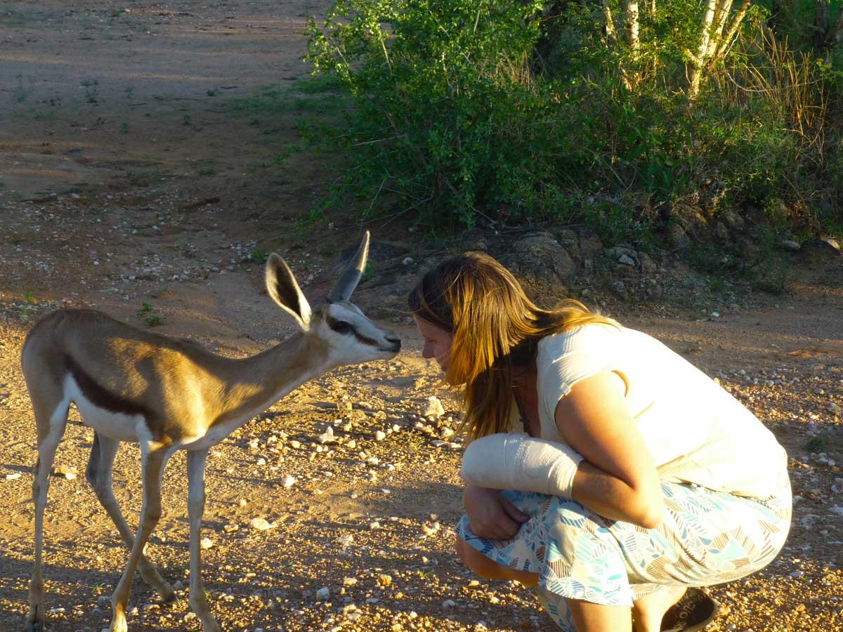 Begegnung mit einem Springbock in Namibia