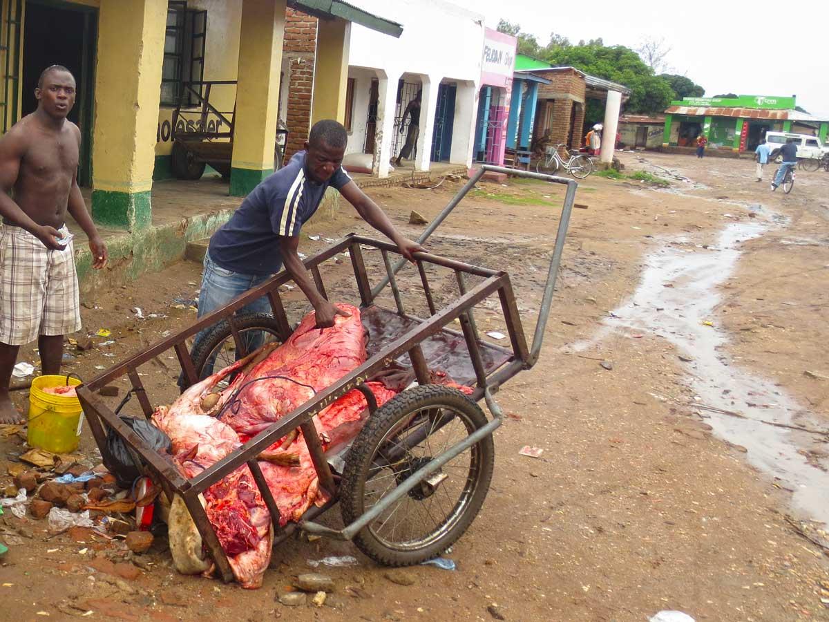 Lieferung von frisch geschlachtetem Rind Fleisch in Malawi