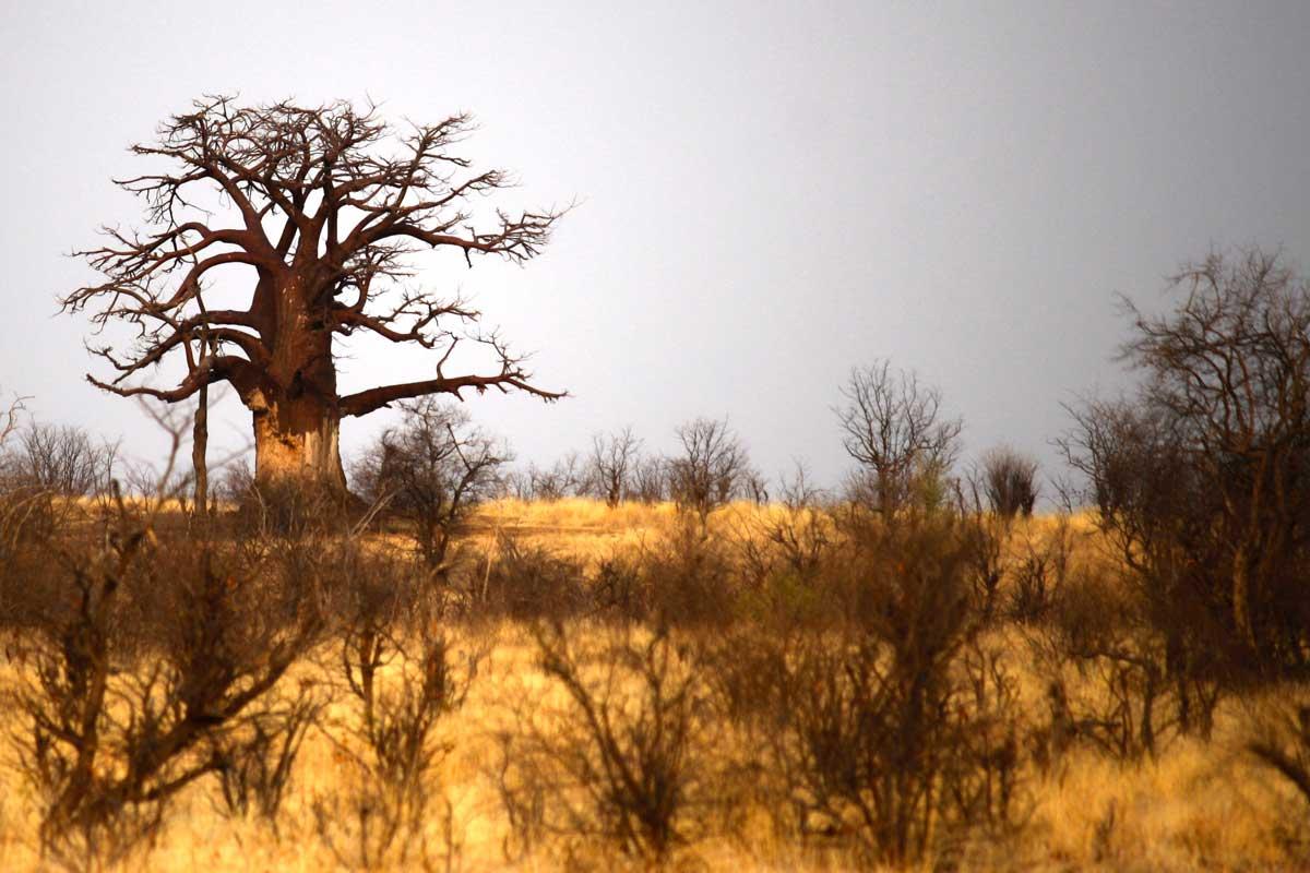 AUf der Hunters Road, entlang der Grenze zwischen Botswana und Simbabwe