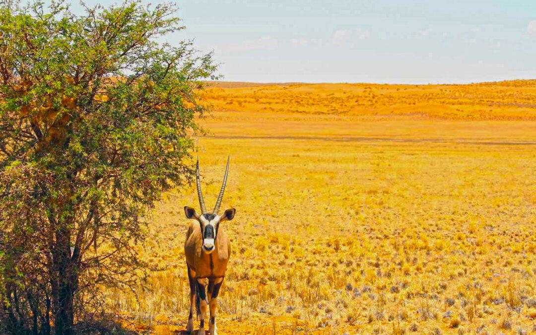 10 Gründe die für Namibia als dein erstes afrikanisches Reiseland sprechen