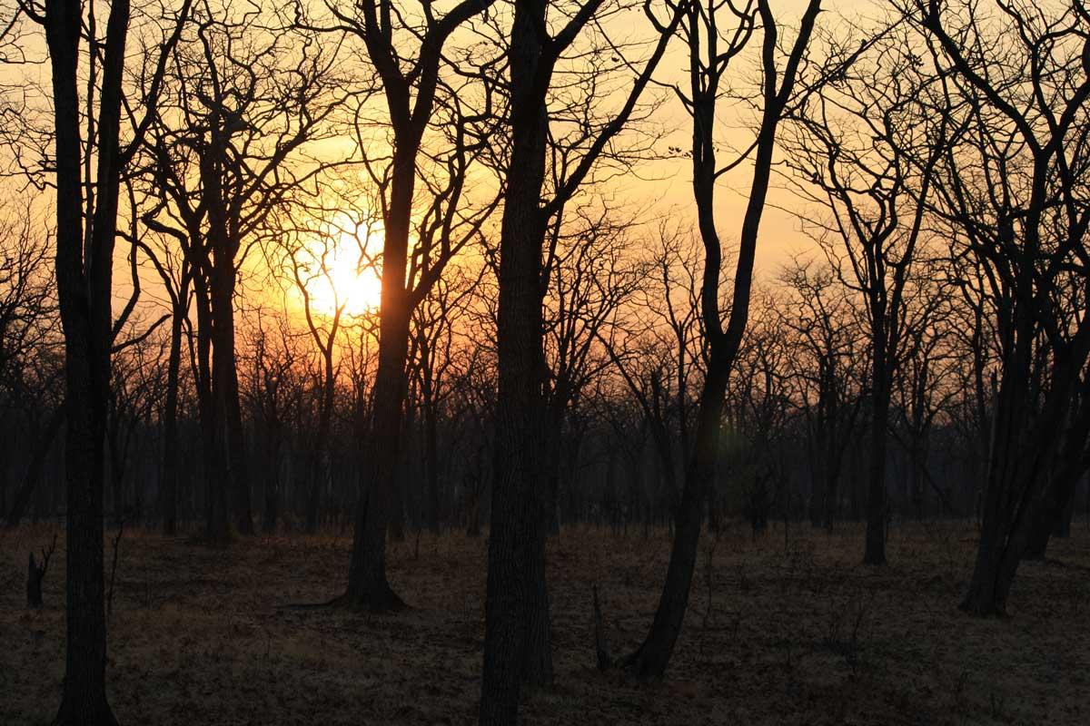Sonnenaufgang am South Luangwa Nationalpark, Sambia